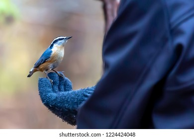 This Nuthatch was looking for a handout of some food