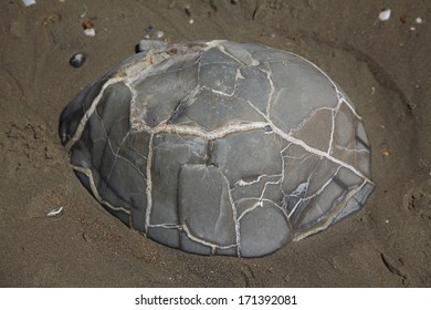 This is one of the geological oddities known as the Moeraki boulders, remaining on a New Zealand beach. This particular boulder resembles a turtle!