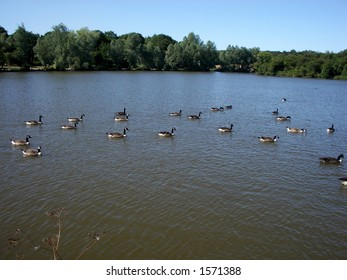 This is one of many views in Hainault Forest with some Canadian geese in it.