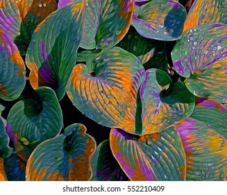 This is one of a series of shots emphasizing the beauty of the Hosta plant.  The curves of its leaves are graceful and elegant.