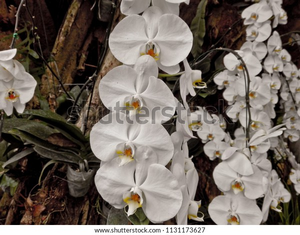 This Orchids Farmer Keep Temperature Control Stock Photo Edit Now