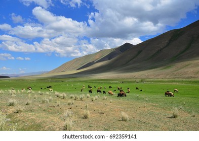 This is Pamir mountain with green grass and a lot of sheeps in Kyrgyzstan along Pamir mountain range