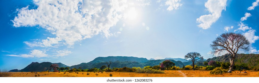 This panorama with mountains, hills, bushes and yellow weeds is taken in Çıralı in afternoon hours