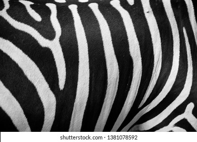 This is the pattern of zebra sking and taken at the national zoological gurden in Sri Lanka.Good abstract pattern which can use any desing.