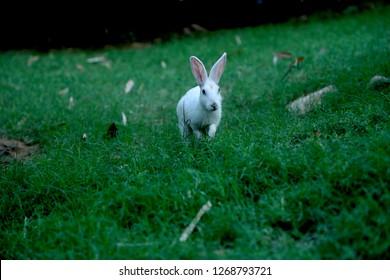 this photo click on green  green grass eating rabbit  beautiful rabbit