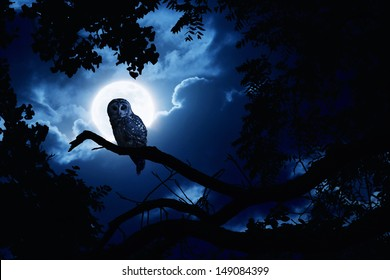 This is a photo illustration of a quiet night, a bright moon rising over the clouds illuminates the darkness, and a Barred Owl sits motionless in the blue moonlight. All my own components.
