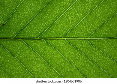 This photo is of a leaf being back lit by a computer screen to change the color, it can produce a striking effect and an abstract background