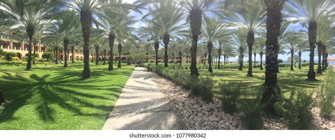 This is a photo of palm trees at a resort in Curcao