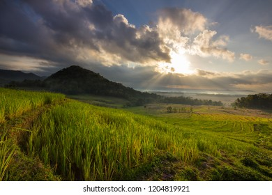 This photo taken in Nanggulan, Yogyakarta, Indonesia. In this place you can see a nice view of paddy field, small hills, sunrise and even Merbabu and Merapi.