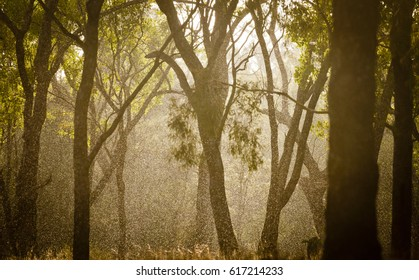 This photograph was taken at Judd's Lagoon just outside Yuleba in Queensland, Australia. There is something magical about the light in a forest when the sun shines through the rain.