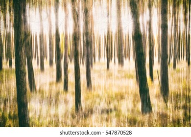 This photography was made during a walk through a pine forest in the flat land of northern Germany.