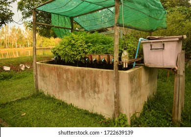 this pic show the aquaponics system have planting vegetables with cultured fish in a concrete, it's recycle water in closed system