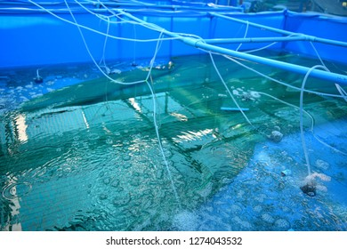 Aquaculture Images, Stock Photos & Vectors | Shutterstock