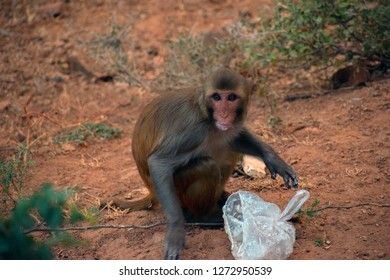 This pic was taken on a mountain, someone left their food or maybe the monkey stole it from them