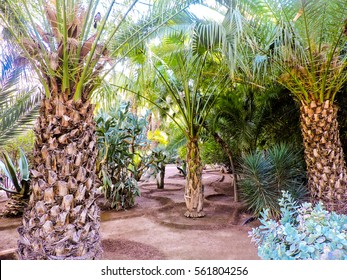 This is the picture of cactus and palm trees at the Le Jardin Majorelle in Marrakesh, Morocco.