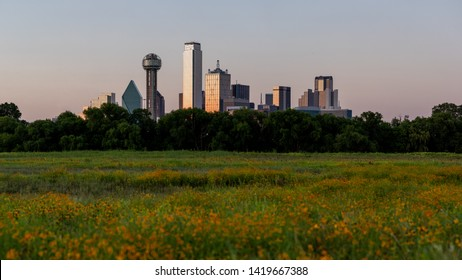 This is the picture of Dallas Skyline and Wildflowers During Sunset, Dallas, Texas.