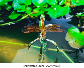 This is a picture of Dragonfly.Which is captured in Khulna,Bangladesh on  August 23 2021.