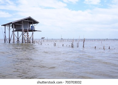 This picture show raises aquatic animal area, ark shell. This is the popular occupation of local people.