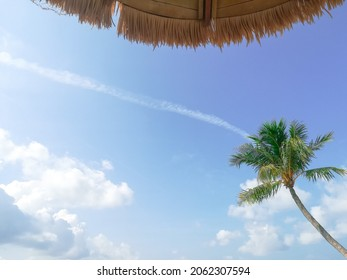 This is a picture of sky in the middle of afternoon at man made beach Forest City Resort. It is a spectacular scenery of the cloud versus coconut tree with contrails.