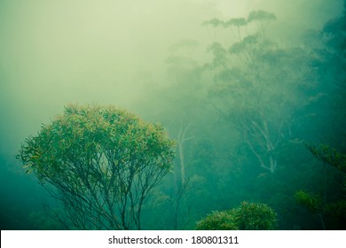 This picture taken in the eucalyptus forests. A eucalyptus tree and clouds done in a vintage style.