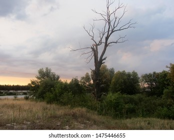 This is a pink dawn among the dark clouds above the riverbank. A dry tree stands darkly among the green thickets.
