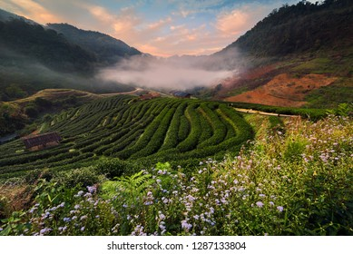 This place is located in front of the Tea plantation 2000 's entrance at Doi Ang Khang in Chiang Mai, THAILAND.Mountain on misty morning.
