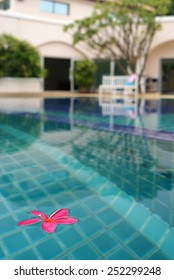 This is  a Plumeria flowers on pool.