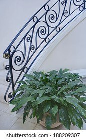 This is a pretty, modern and light staircase with black iron railing and a potted leafy plant set in vertical format.  Simple, clean and classic.