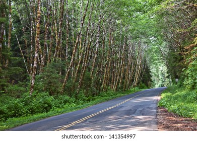 This is a quiet, and empty rural road through a thickly forested landscape of woods.  Many conceptual ideas, journey, alone, a path, lost, etc.