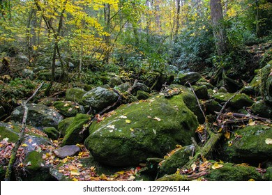 This is Ramsey Cascades in Autumn. This area is located in  Great Smoky Mountains NP near Gatlinburg, TN. One large moss covered boulder, fallen leaves, branches, smaller moss covered rocks are seen.