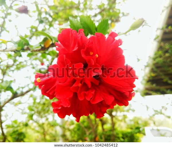 This red flower looks very beautiful.