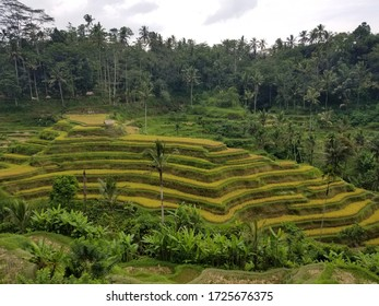 This is Rice Terrace. beautiful landscape.