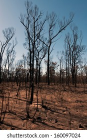 This scene, comprising parched earth and burnt trees, was captured following the recent bushfires in New South Wales, Australia