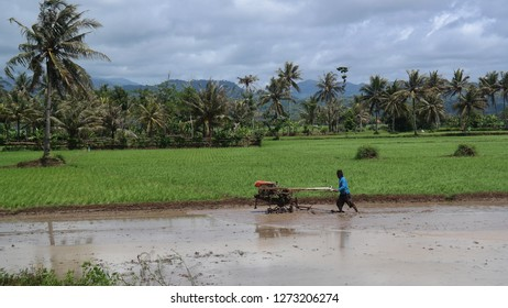 this scene describe a farmer is plowing a field of rice with the semimachinal tracktor. This rare view has taken at Garut town in Indonesia aview days before the end of 2018