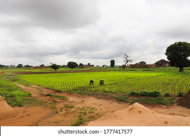 This scene shows two African farmers working on a rice farm close to a town on a rainy day.