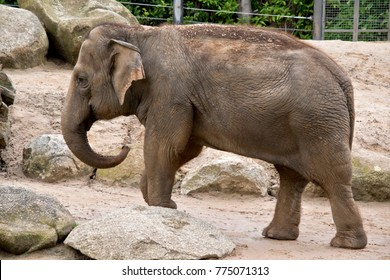 this is a side view of a young elephant