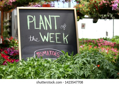 This sign shows tomatoes as the plant of the week at a greenhouse.  There are tomato plants growing in front of the sign.  In addition, there are other types of flowers visible in the background.