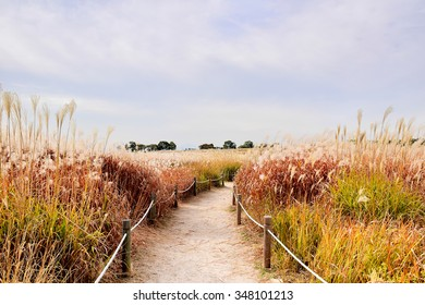 This is Sky park where is in Seoul, South Korea with feather grass.