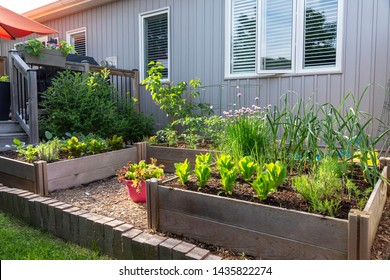 This small urban backyard garden contains square raised planting beds for growing vegetables and herbs throughout the summer.  Brick edging is used to keep grass out, and mulch helps keep weeds down.