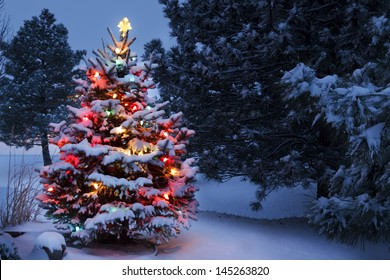 This Snow Covered Christmas Tree stands out brightly against the dark blue tones of early morning light in this winter scene.