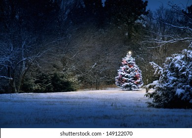 This Snow Covered Christmas Tree stands out brightly against the dark blue tones of this snow covered scene. The light almost appears magical as it illuminates the surrounding scene.