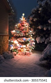 This Snow Covered Christmas Tree stands out brightly against the dark blue tones of late evening light and a brisk snowfall on Christmas Eve night.