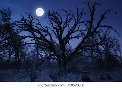 This spooky night time Halloween cemetery with a watching owl and full moon makes a great illustration for this holiday season.