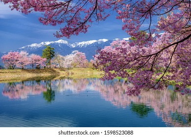 This is the Spring Landscape in Nagano Prefecture, Japan. Beautiful cherry trees.