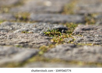 This stone pavement closeup is a little part of walks and places in an urban park. With joints, split and a little bit of grass. 1
