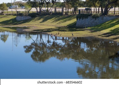 this stormwater pond is a favorite with all sorts of water fowl