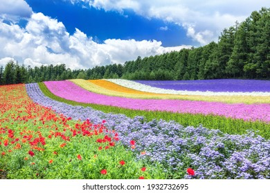 This is the summer flower field in Hokkaido prefecture, Japan.  How about using this image for background of a calendar, a poster or any other promotional materials.
