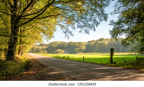 This tarmac road leads through green fields, dense forests and along farms located at the Tankenberg (near Oldenzaal) on a sunny october day but sun is setting.  This is a typical Dutch landscape.