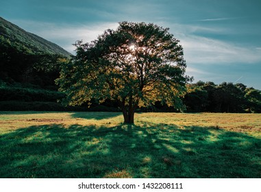 this is a tree picture
