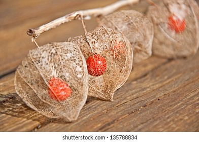 This unusual form of a Chinese lantern plant, is the skeleton of the plant, showing the seed pod inside after winter.  This still life has an emphasis on the 2nd pod in the row.